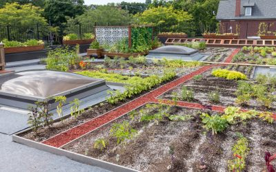 The Green Roof Revolution: A Growing Trend for Rooftops